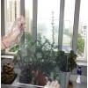 高透光玻璃节能隔热涂料